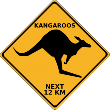 kangaroos-crossing